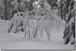 Drammensmarka-220110 012
