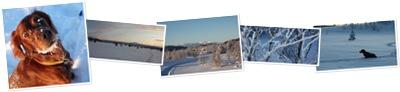 Vis Synhauglia - jul og nyttårshelga 2009-2010