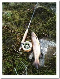 Kilosfisk fra Gullvann20100717
